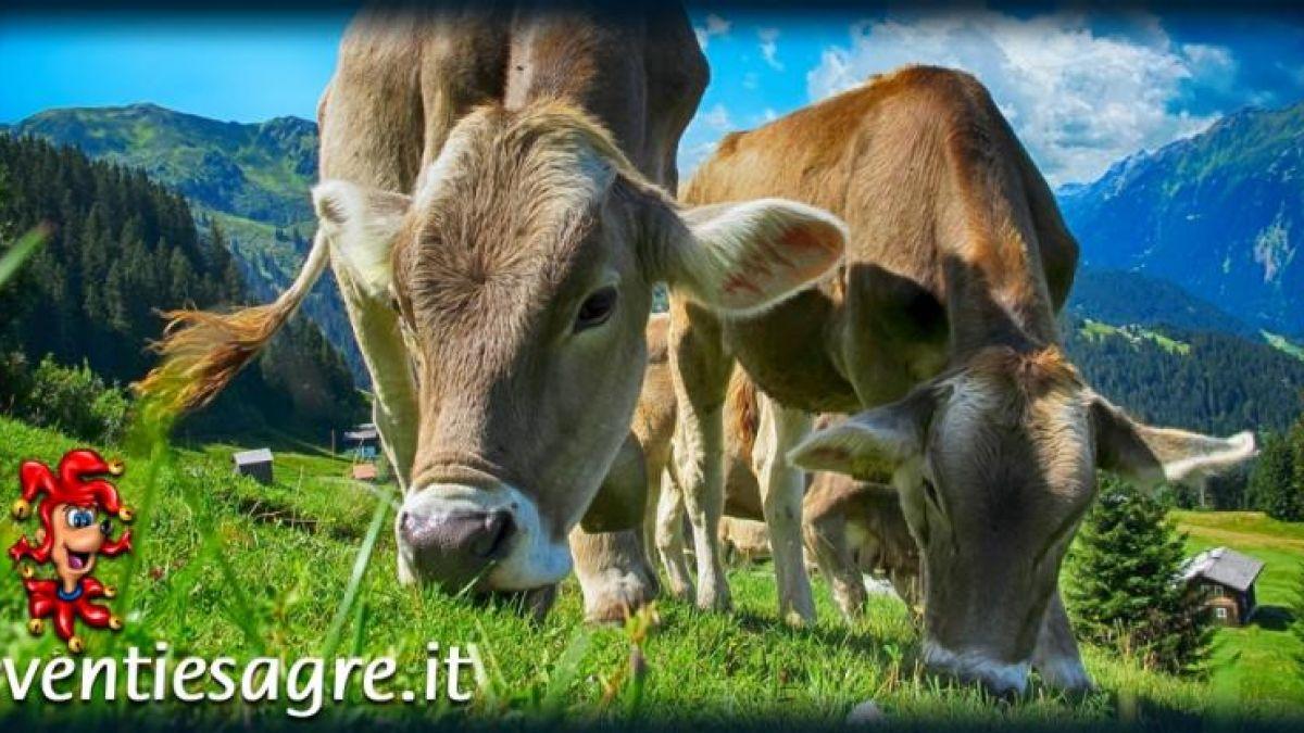 Calendario Fiere Agricole 2020.Fiera Internazionale Del Bovino Da Latte A Cremona 2019