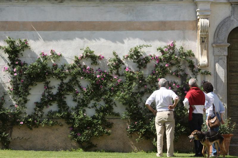 Rose di maggio a casalzuigno date 2016 va lombardia eventi e sagre - Mostra della porta ...