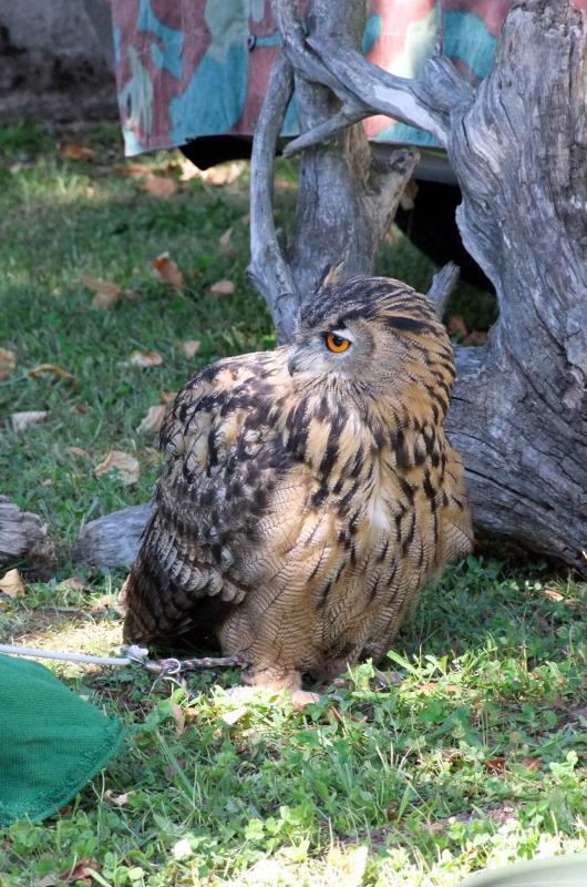 Mostra Ornitologica ed Avicunicola a Tricesimo | 2019 | (UD