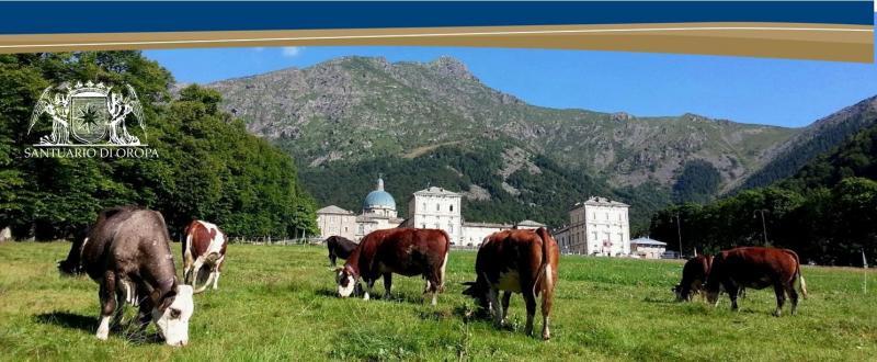 Fiera di san bartolomeo biella bi 2017 piemonte for Fiere piemonte oggi