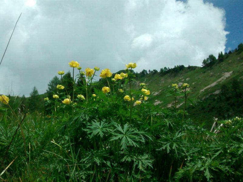 conoscere i fiori spontanei della pedemontana del grappa