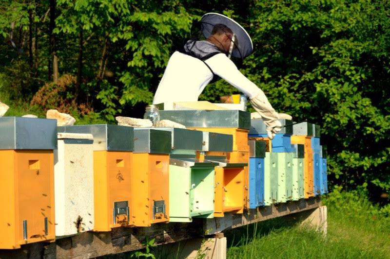 Fiera nazionale di apicoltura a marostica marostica vi for Fiere alimentari 2016