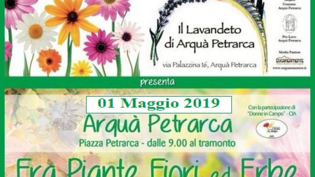 Calendario Cinema Petrarca.Fra Piante Fiori Ed Erbe A Arqua Petrarca 2019 Pd