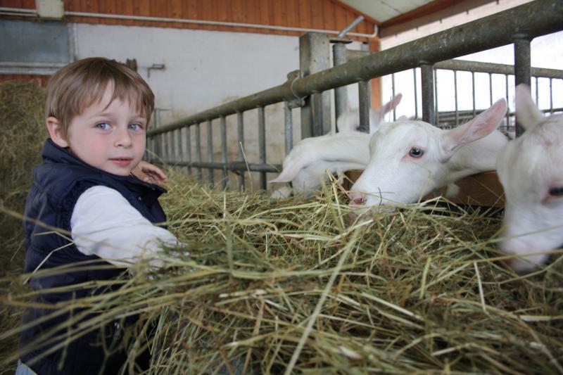 Fattorie didattiche aperte 2016 lombardia eventi e sagre for Piani di fattoria con foto