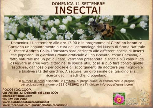 Insecta - Sgonico